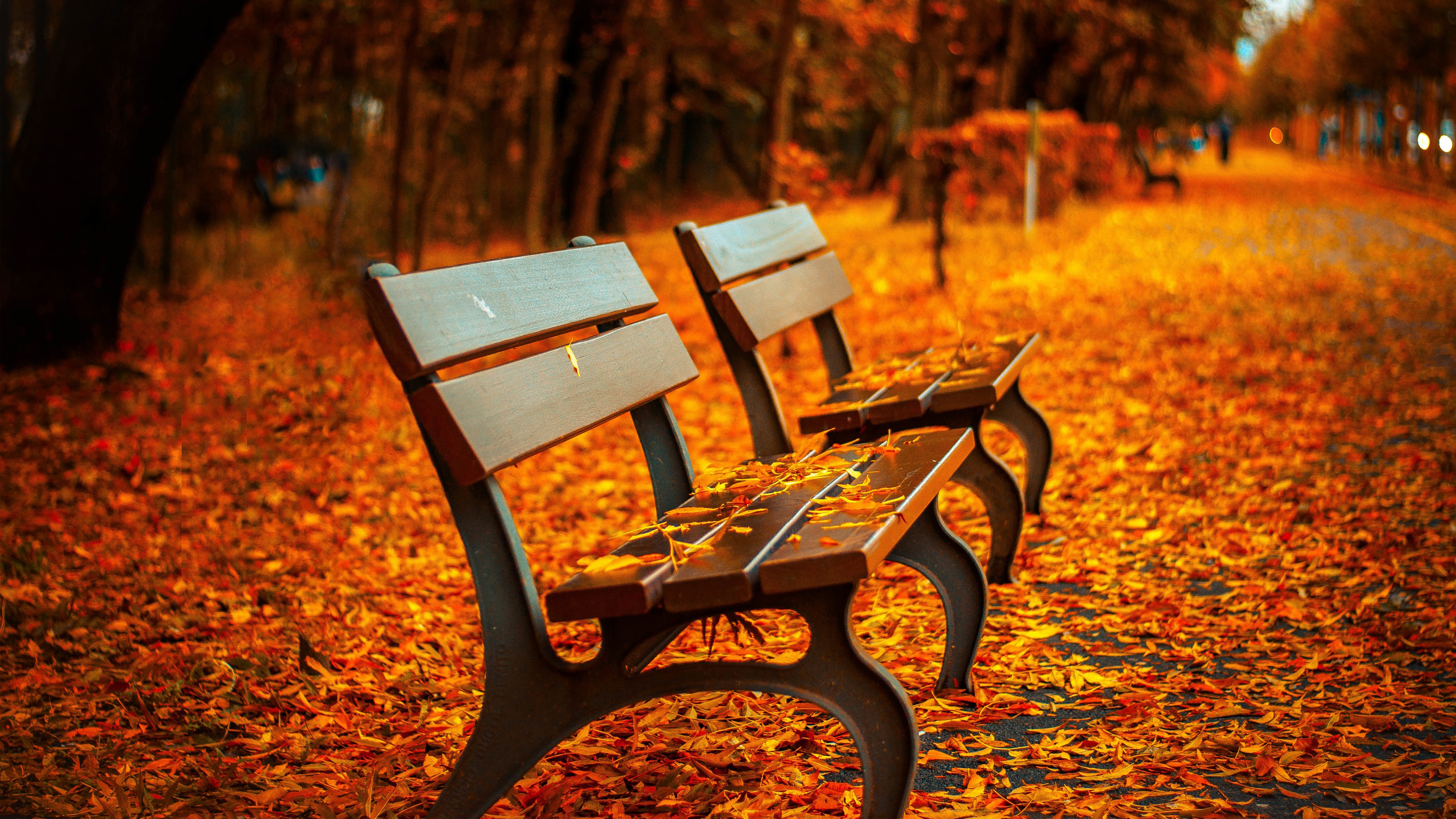 Wallpapers Tagged With AUTUMN | AUTUMN HD Wallpapers | Page 1