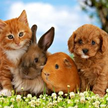 Kittens And Puppies Wallpaper Sf Wallpaper