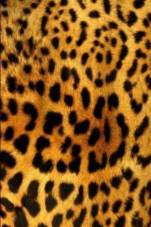 Collection of Leopard Print Wallpaper on HDWallpapers