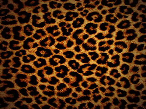 leopard-print-wallpaper-19 jpg