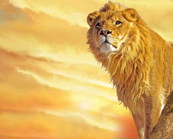 Download Lion Art Wallpaper | Free Wallpapers | Lion Pictures and