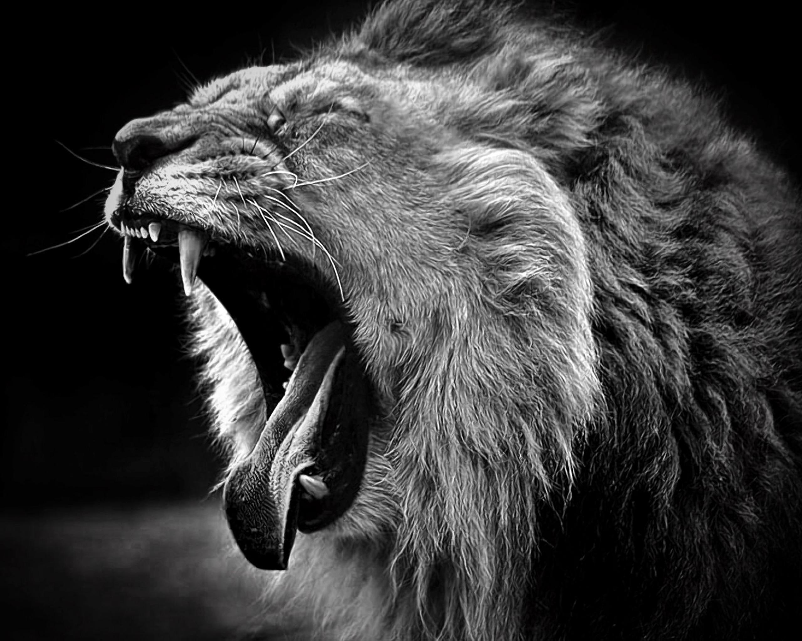 Lion Black and White HD Background Wallpapers 6360 - Amazing