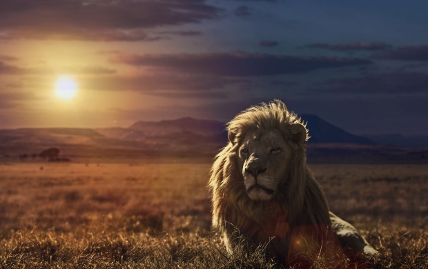 Lion HD Wallpapers, Free Wallpaper Downloads, Lion HD Desktop