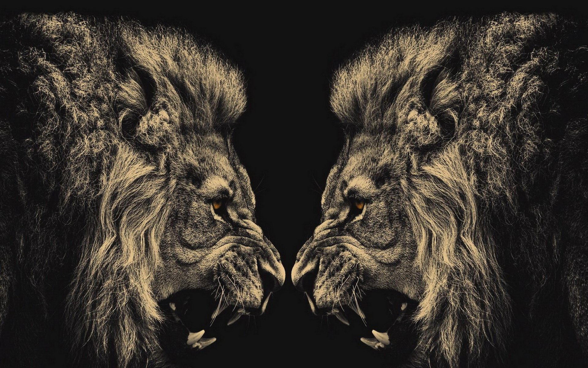Lion Computer Wallpapers, Desktop Backgrounds | 1920x1200 | ID:413249