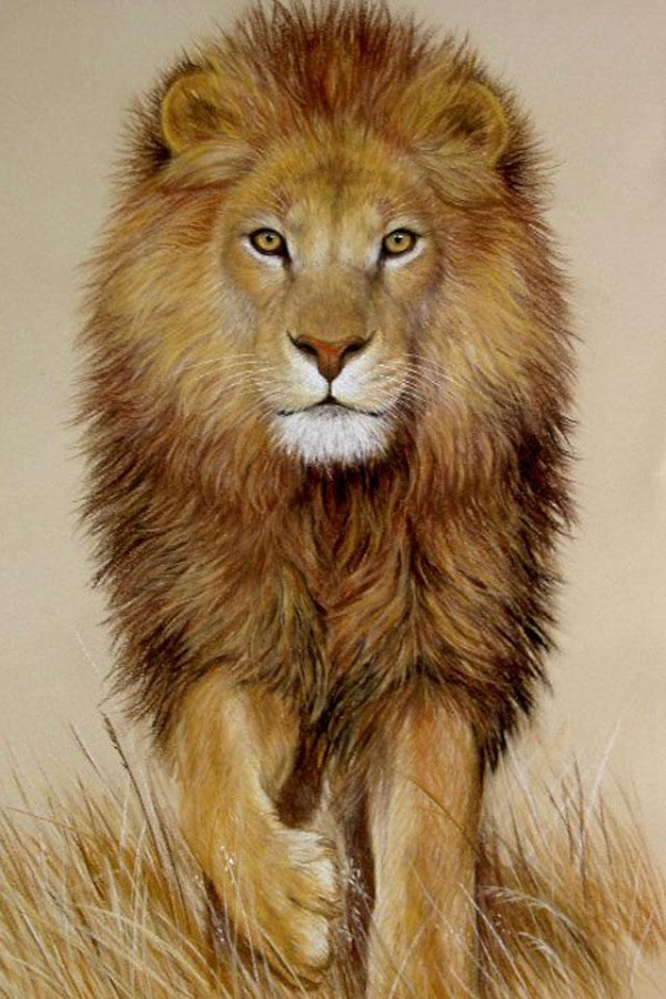Lion Wallpaper - Android Apps on Google Play