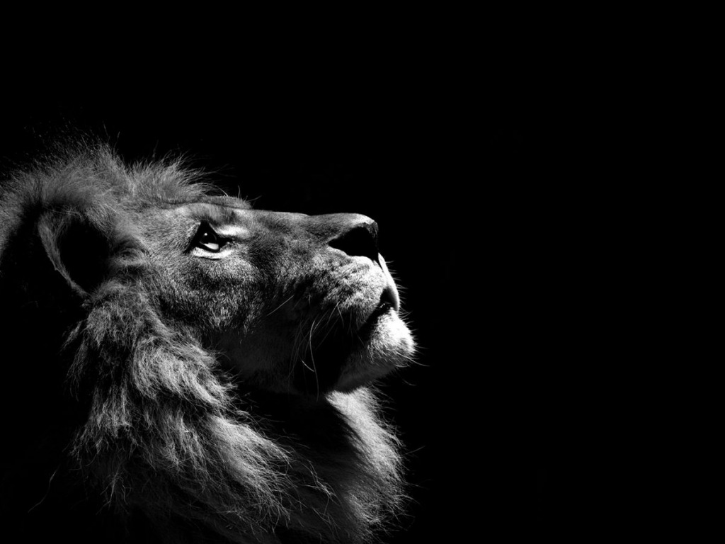 Lion Wallpaper - Best HD Wallpaper
