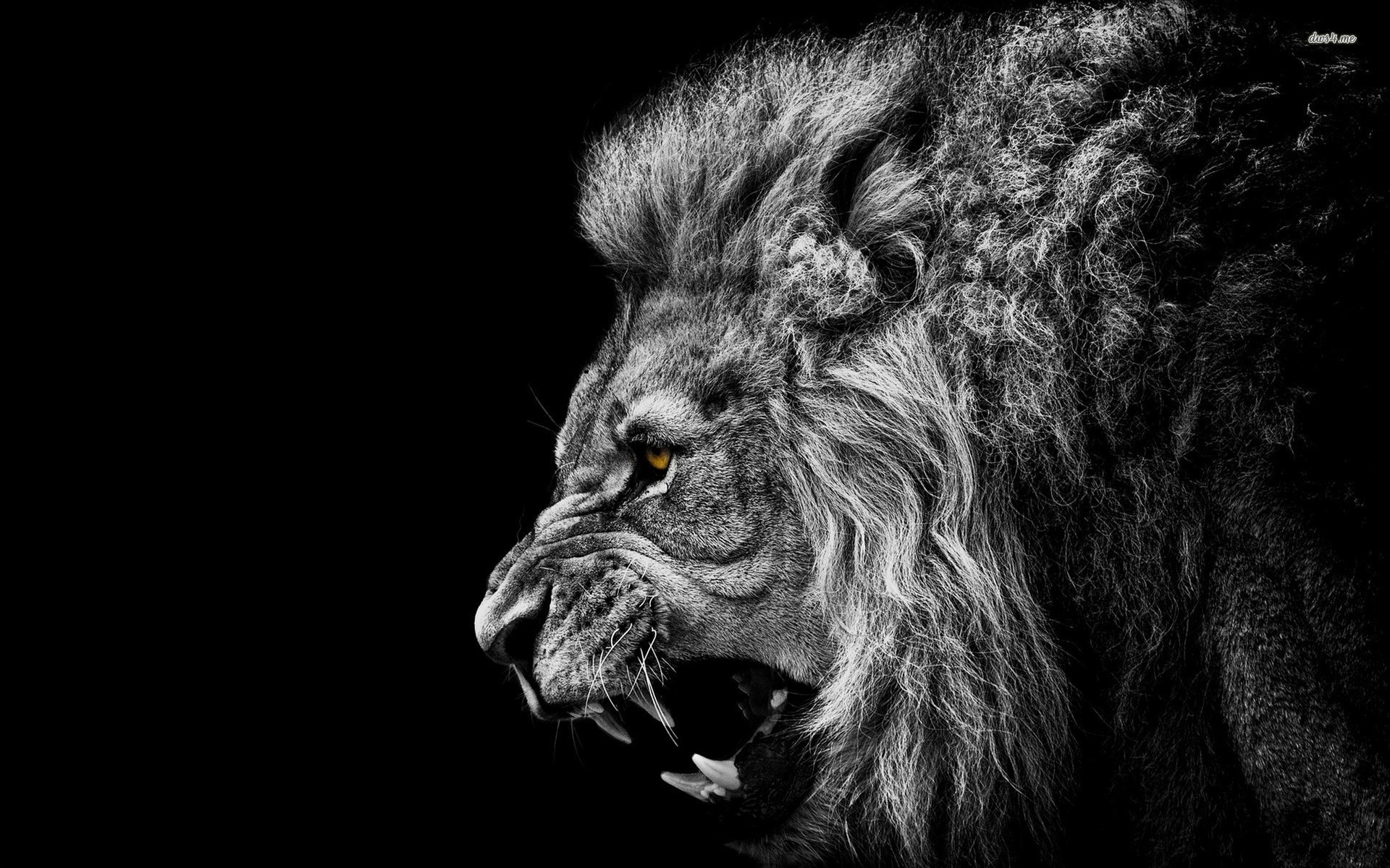 Roaring Lion Wallpaper Full HD Roaring Black And White Abstract