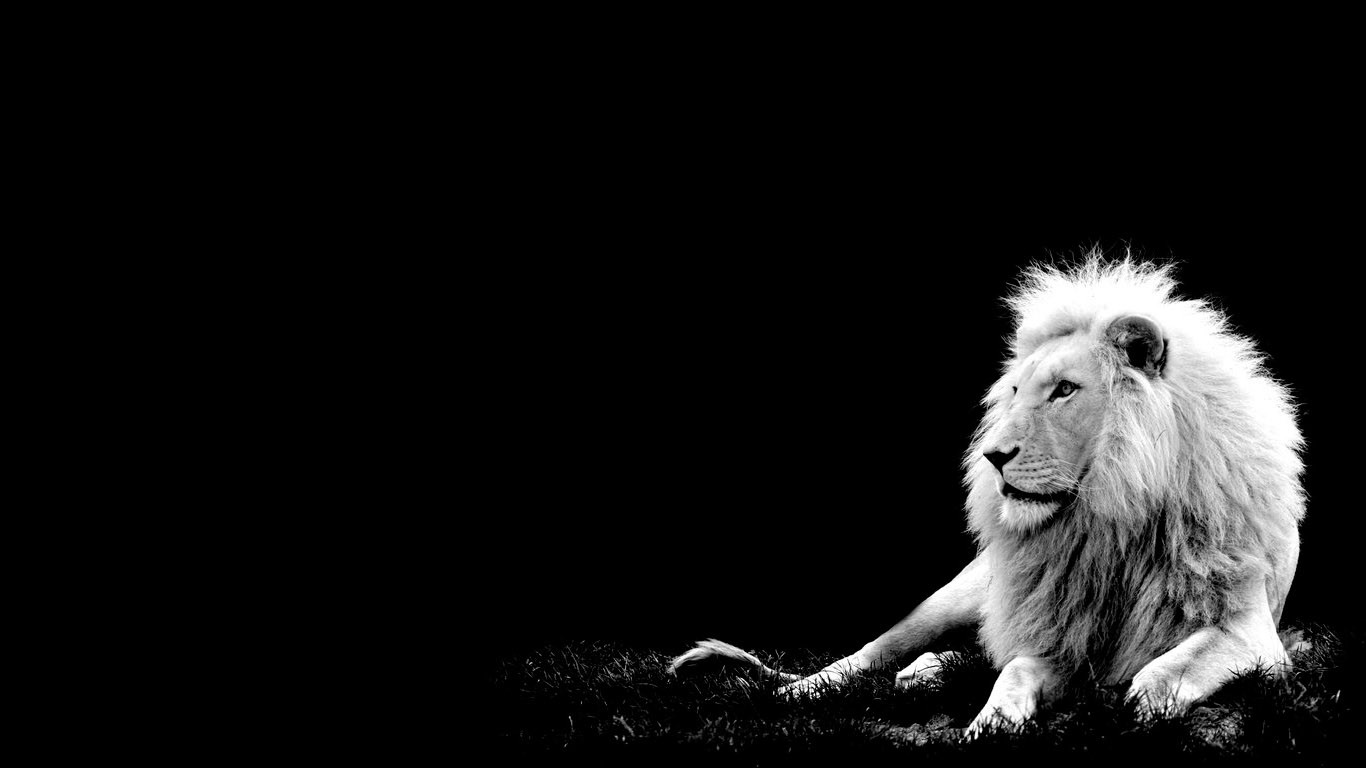 White Lion Full Body Wallpaper HD | lions | Pinterest | Pictures