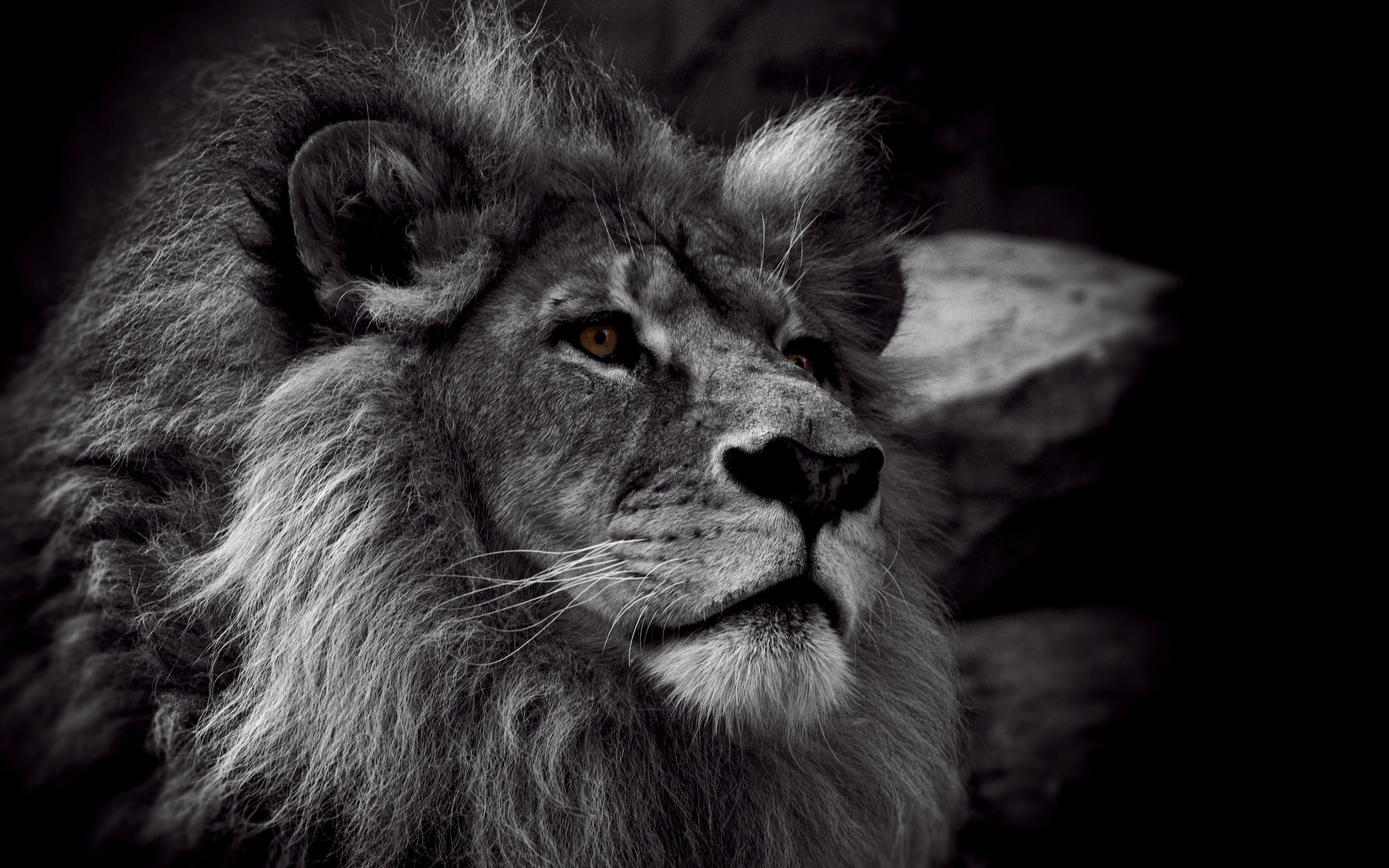Download Black And White Lion Wallpaper | Full HD Wallpapers