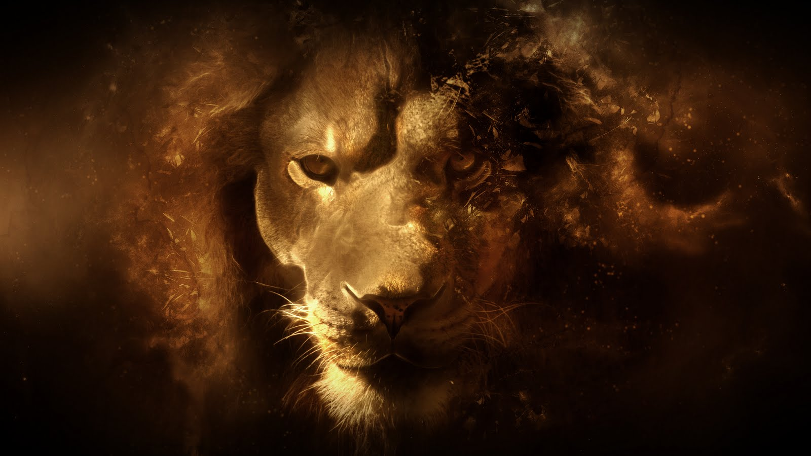 Lion Full HD Quality Wallpapers, 48+ Widescreen Wallpapers
