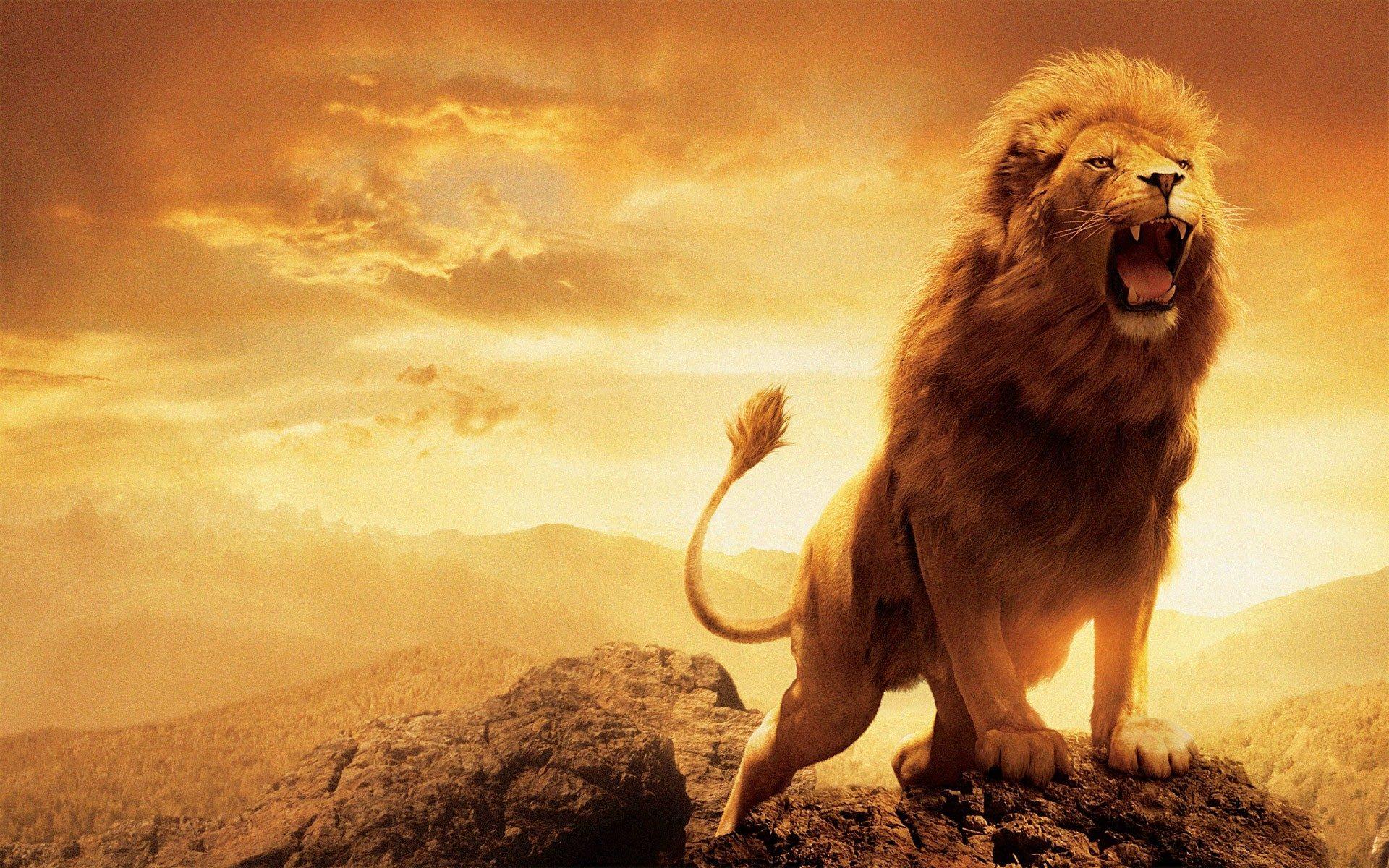 Lion Wallpaper Hd | HD Picturez