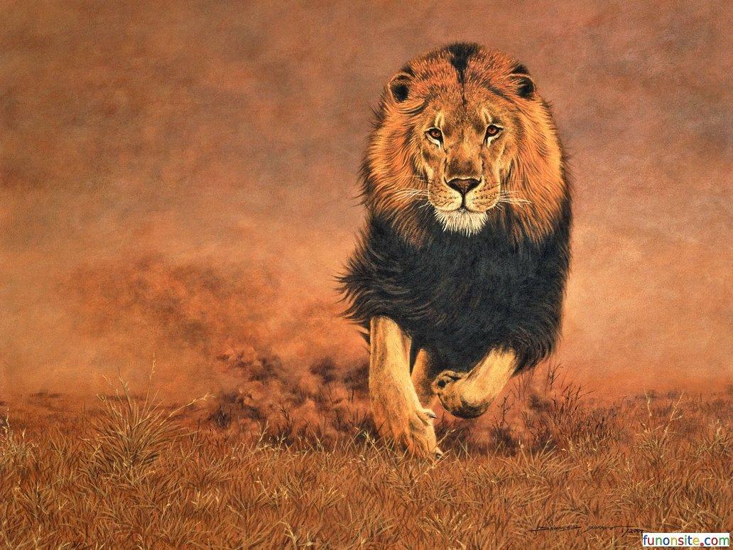 Animal Wallpaper ›› Free Download Lion Wallpaper Hd | Funonsite
