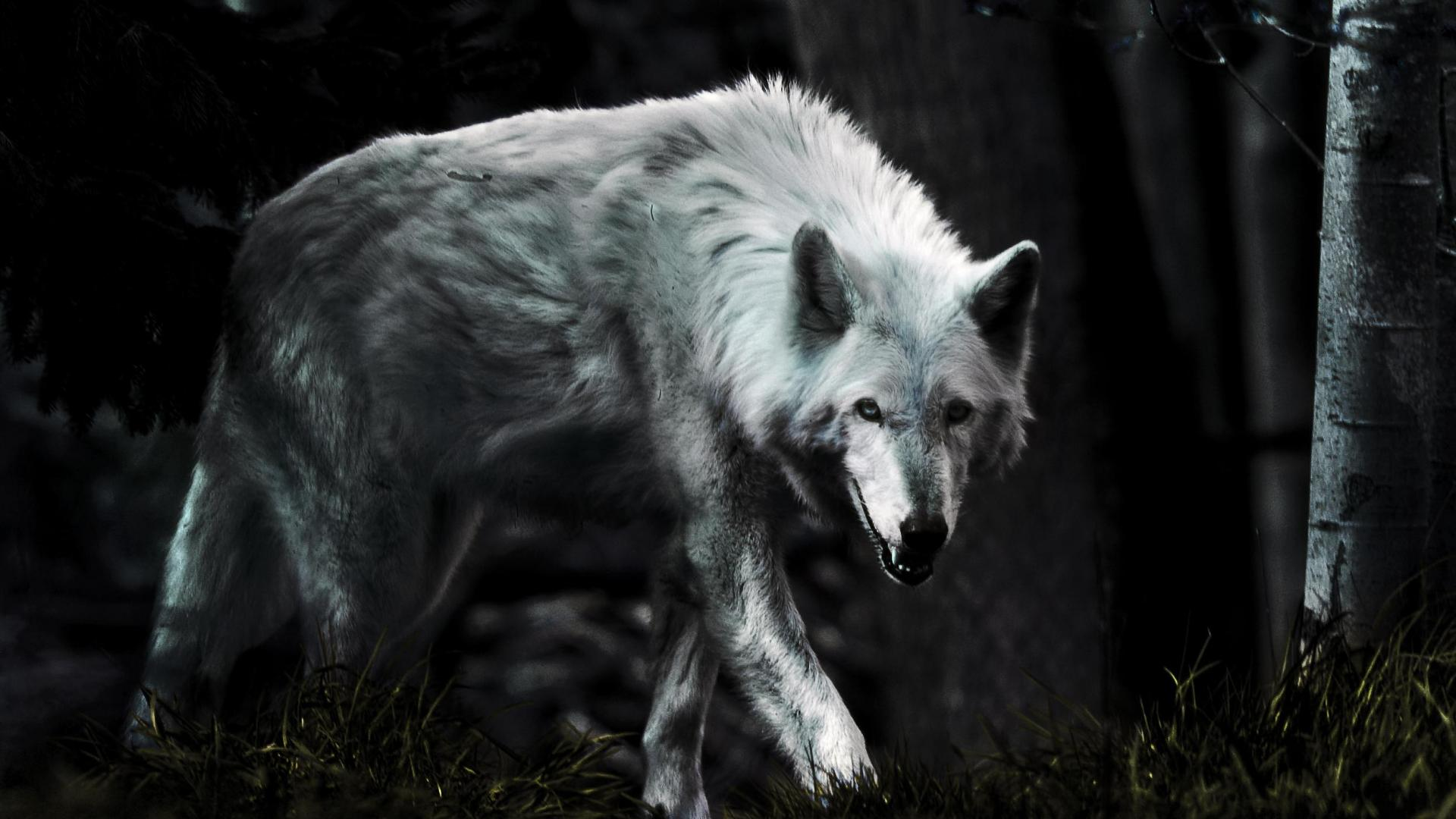 Lone Wolf Wallpapers Group 72