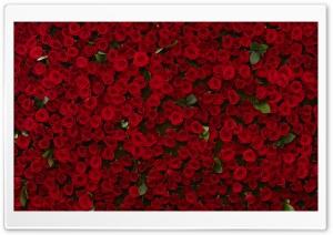 WallpapersWide com | Love HD Desktop Wallpapers for Widescreen