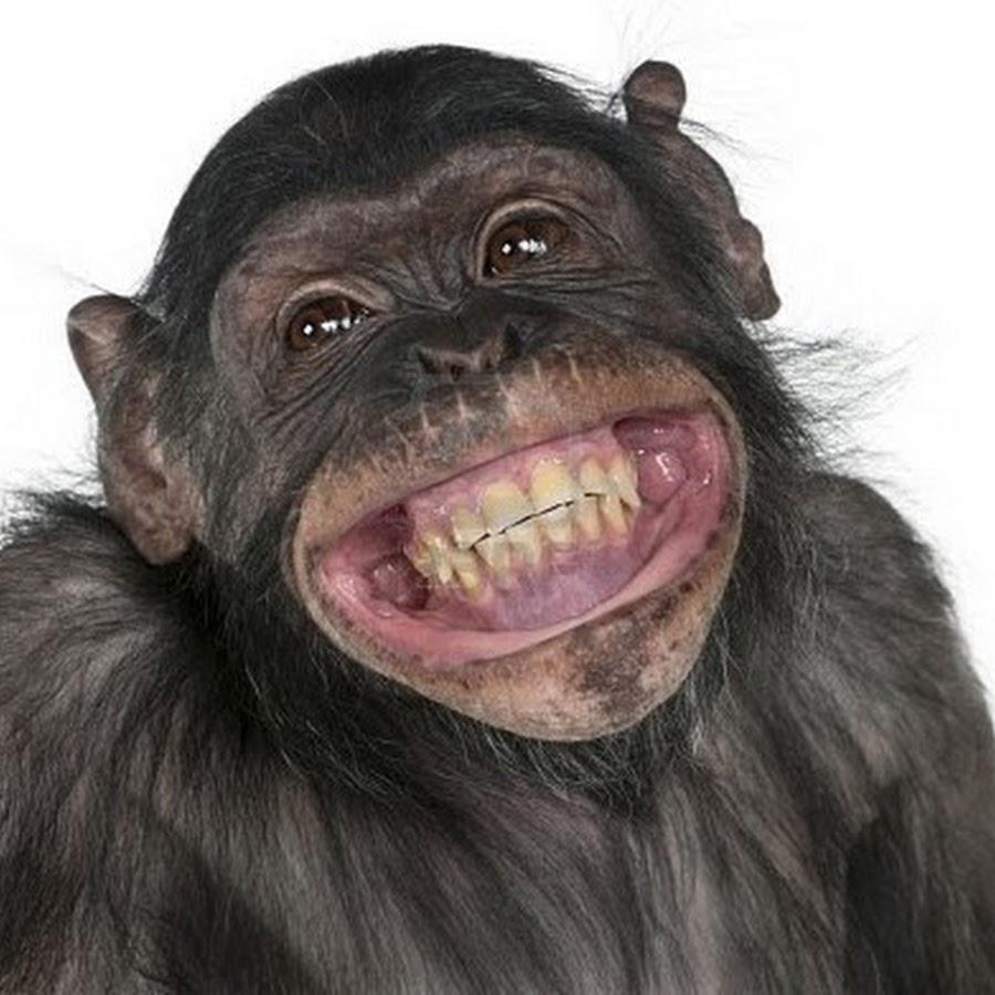 Turd Flinging Monkey - YouTube