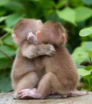 肩を組む猿