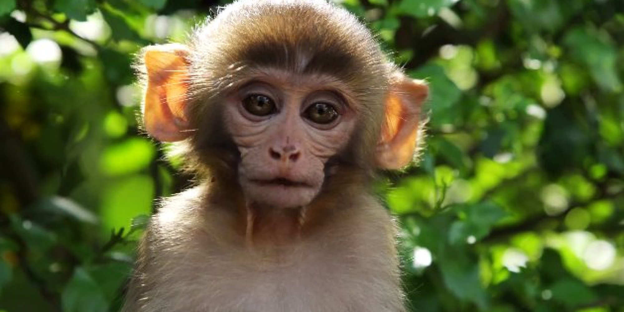 Monkeys: Pictures, Videos, Breaking News