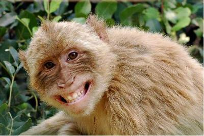 Monkey spends 30 minutes in Parliament - Times of India