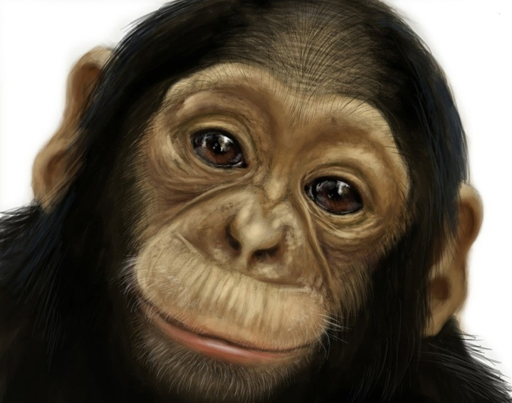 78 Best images about Monkey on Pinterest   Baboon, Jungles and Dna