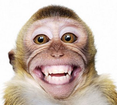 1000+ ideas about Monkey Pictures on Pinterest   Funny monkeys