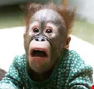 Funny Monkey Pictures - Unbound State   Humor , Funny Pictures and