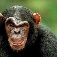 Monkey Pictures, Images & Photos   Photobucket