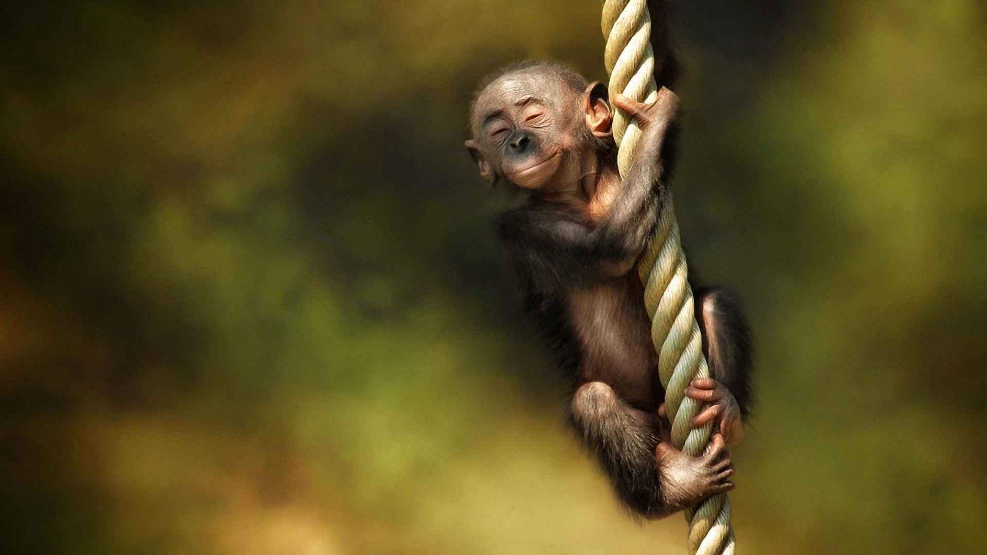 Full HD 1080p Monkey Wallpapers HD, Desktop Backgrounds 1920x1080