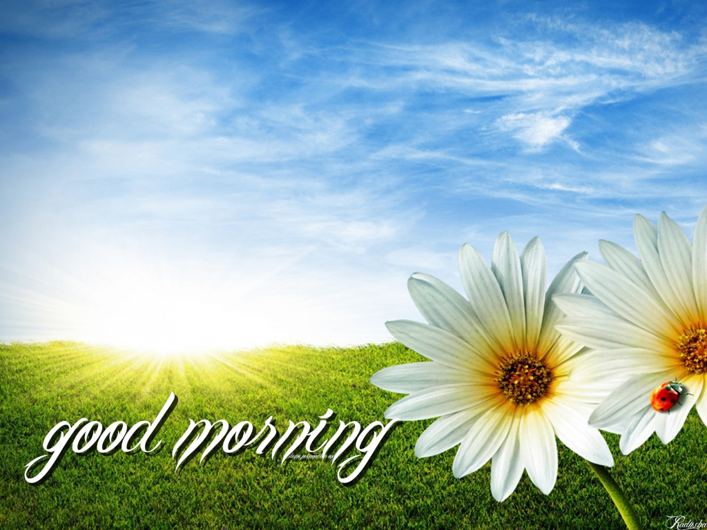 Good Morning Wallpapers HD Pictures – One HD Wallpaper Pictures