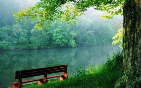 Most Beautiful Green Nature Wallpapers In The World Hd With Photos