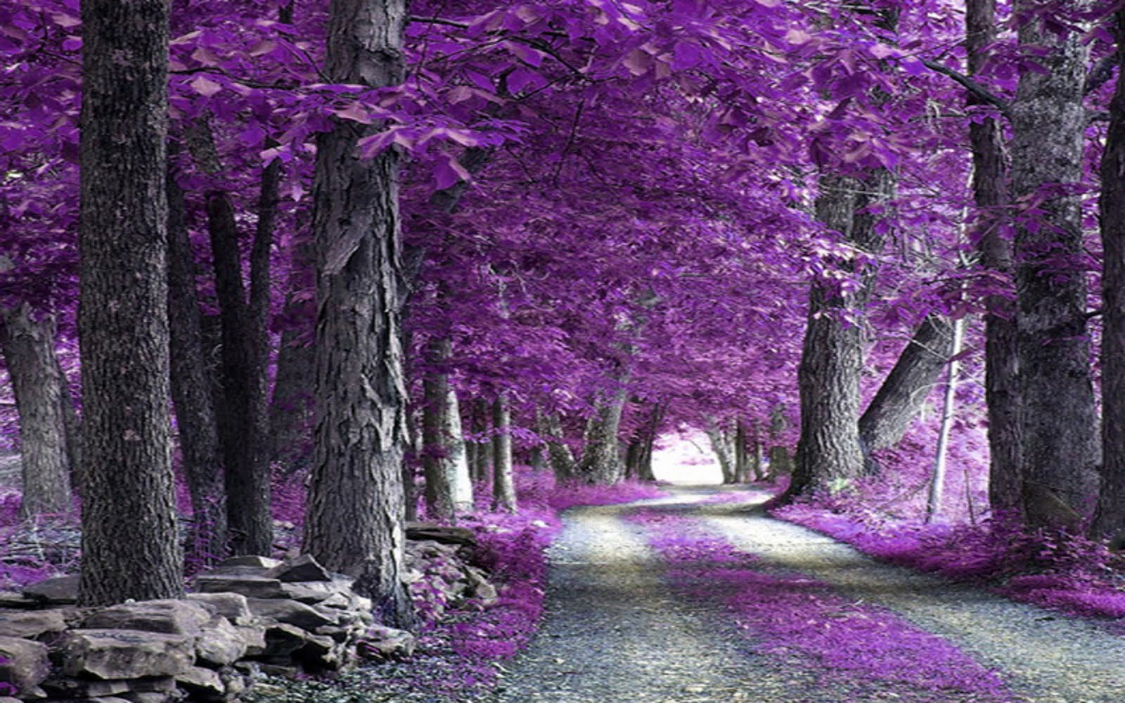 Most Beautiful Nature Wallpapers In The World Sf Wallpaper