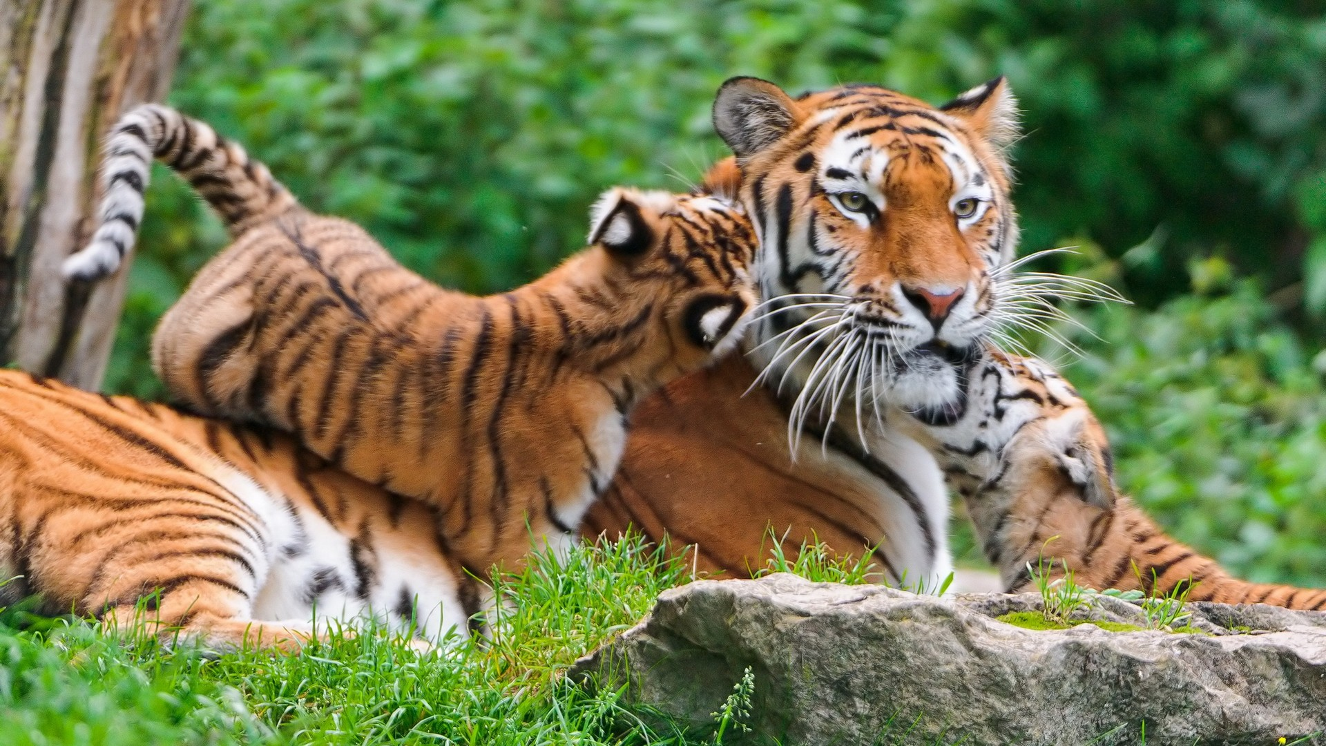 Nature With Animals Wallpapers Page 1