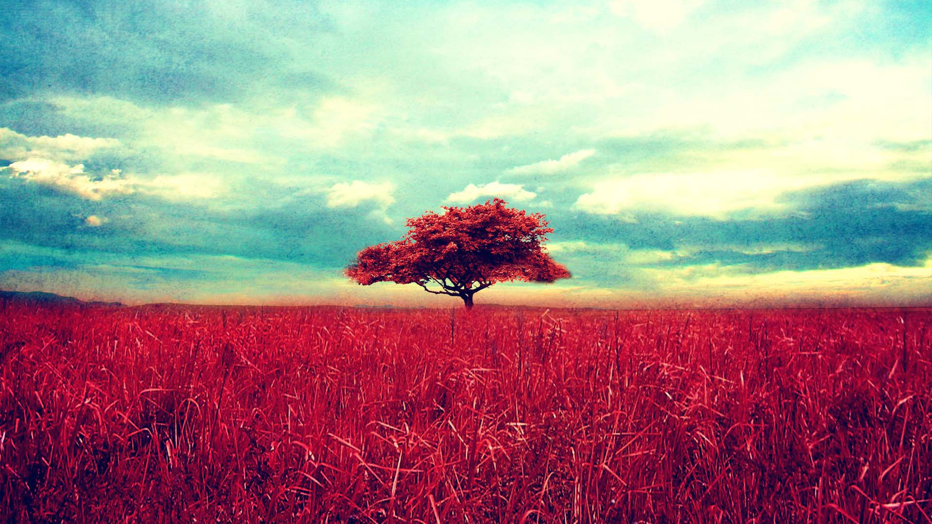 Nature Wallpapers Tumblr (74+)