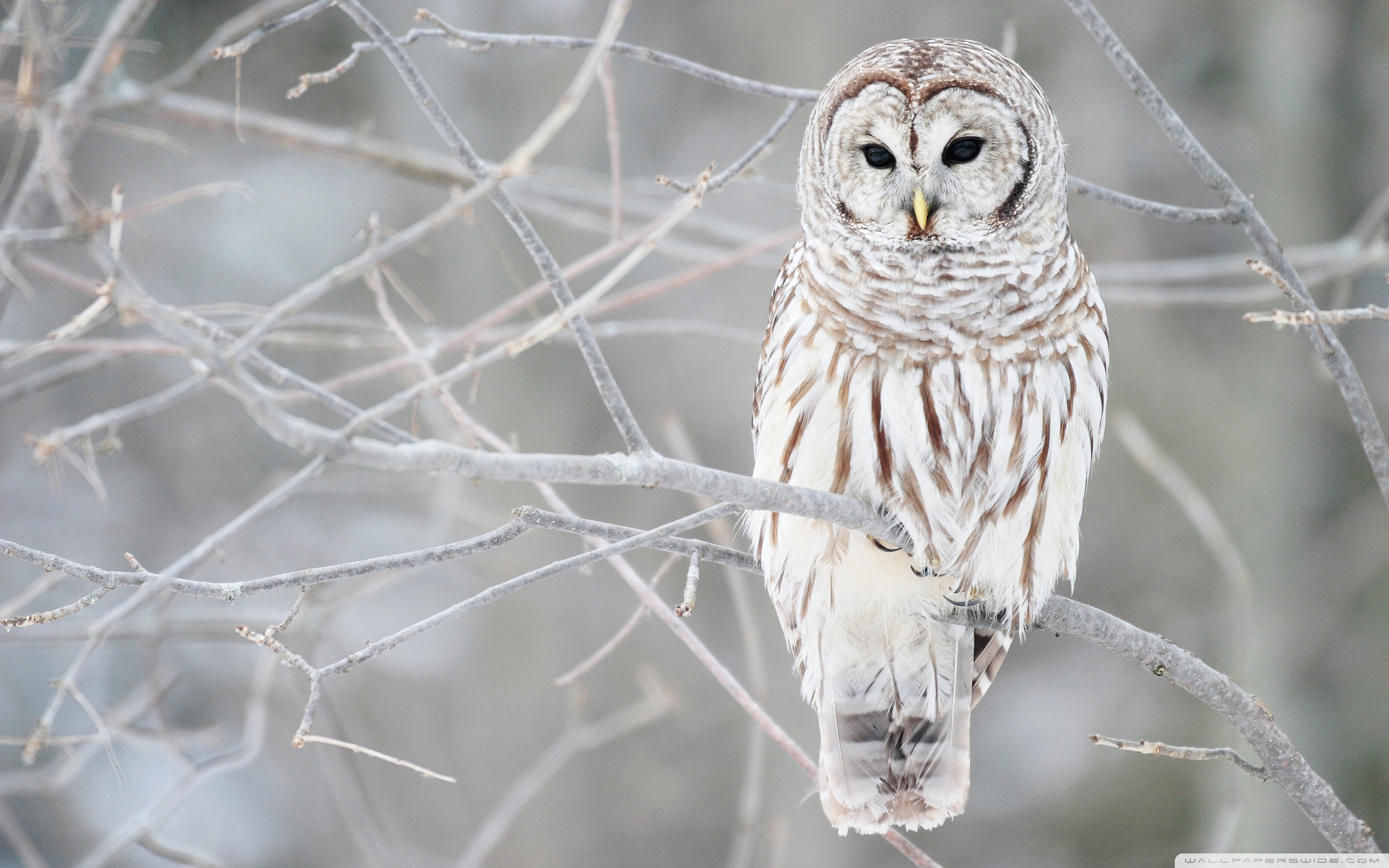 45+ HD Owl Wallpapers and Photos | View FHDQ Wallpapers
