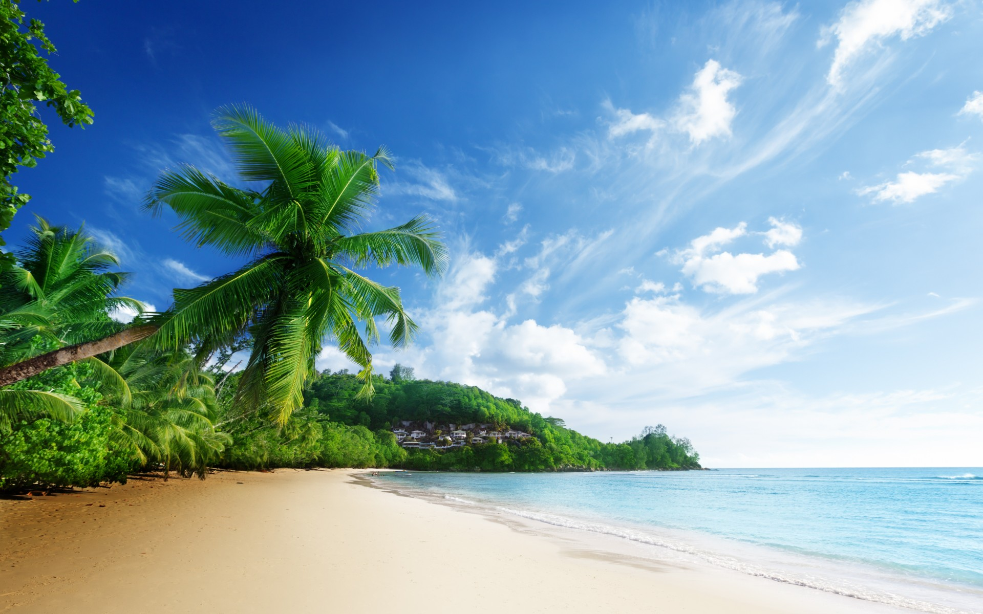 Palm Trees Beach Wallpapers Group (84+)