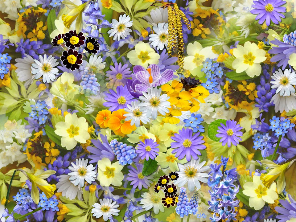 Pictures of spring flowers sf wallpaper spring flowers free images on pixabay mightylinksfo
