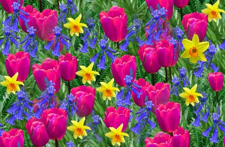 Pictures of spring flowers sf wallpaper pictures spring flowers spring flowers backgrounds free src mightylinksfo
