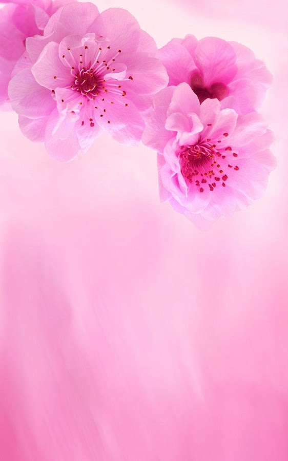 Pink flower wallpaper sf wallpaper pink flowers live wallpaper android apps on google play altavistaventures Image collections