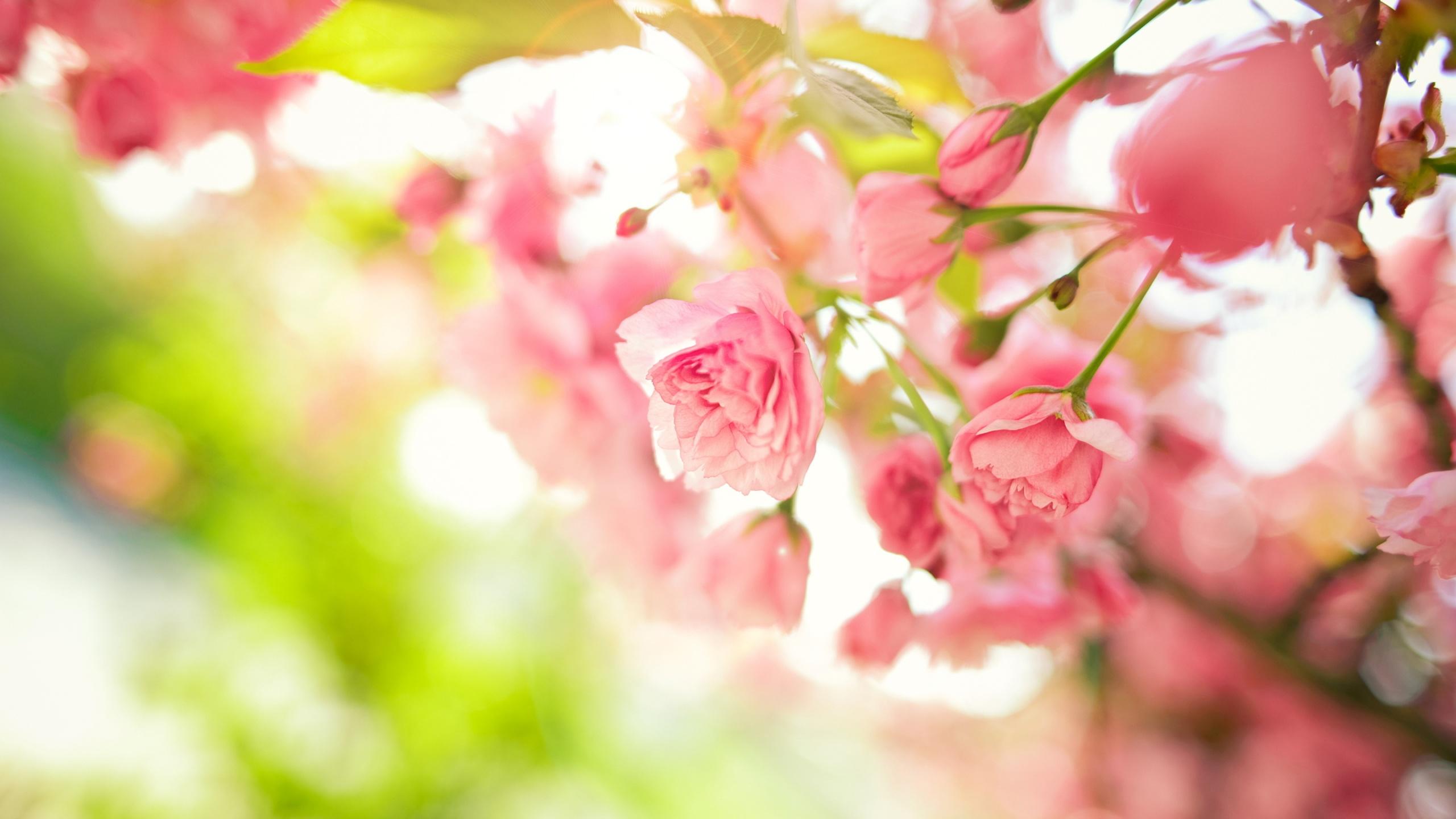Pink Flower Wallpaper Sf Wallpaper