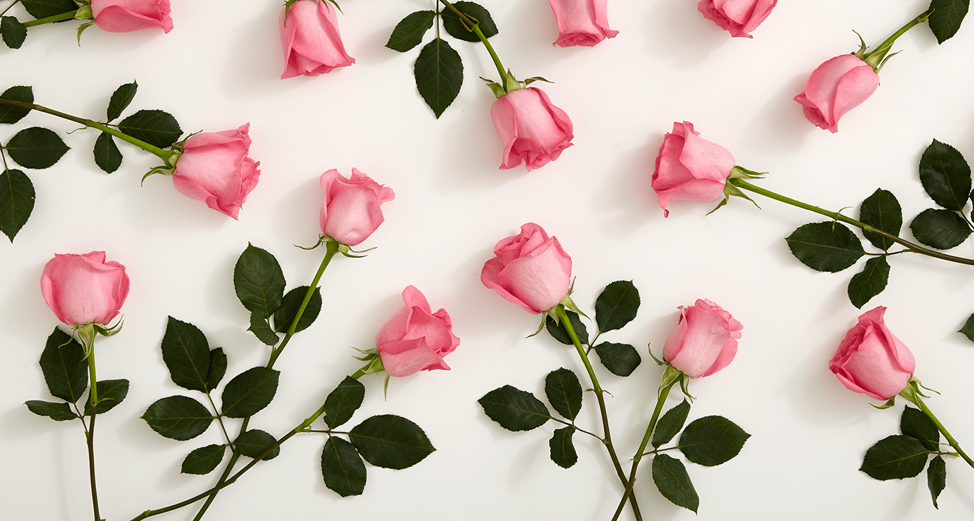 Pink roses images sf wallpaper history meaning of pink roses a shade by shade guide mightylinksfo