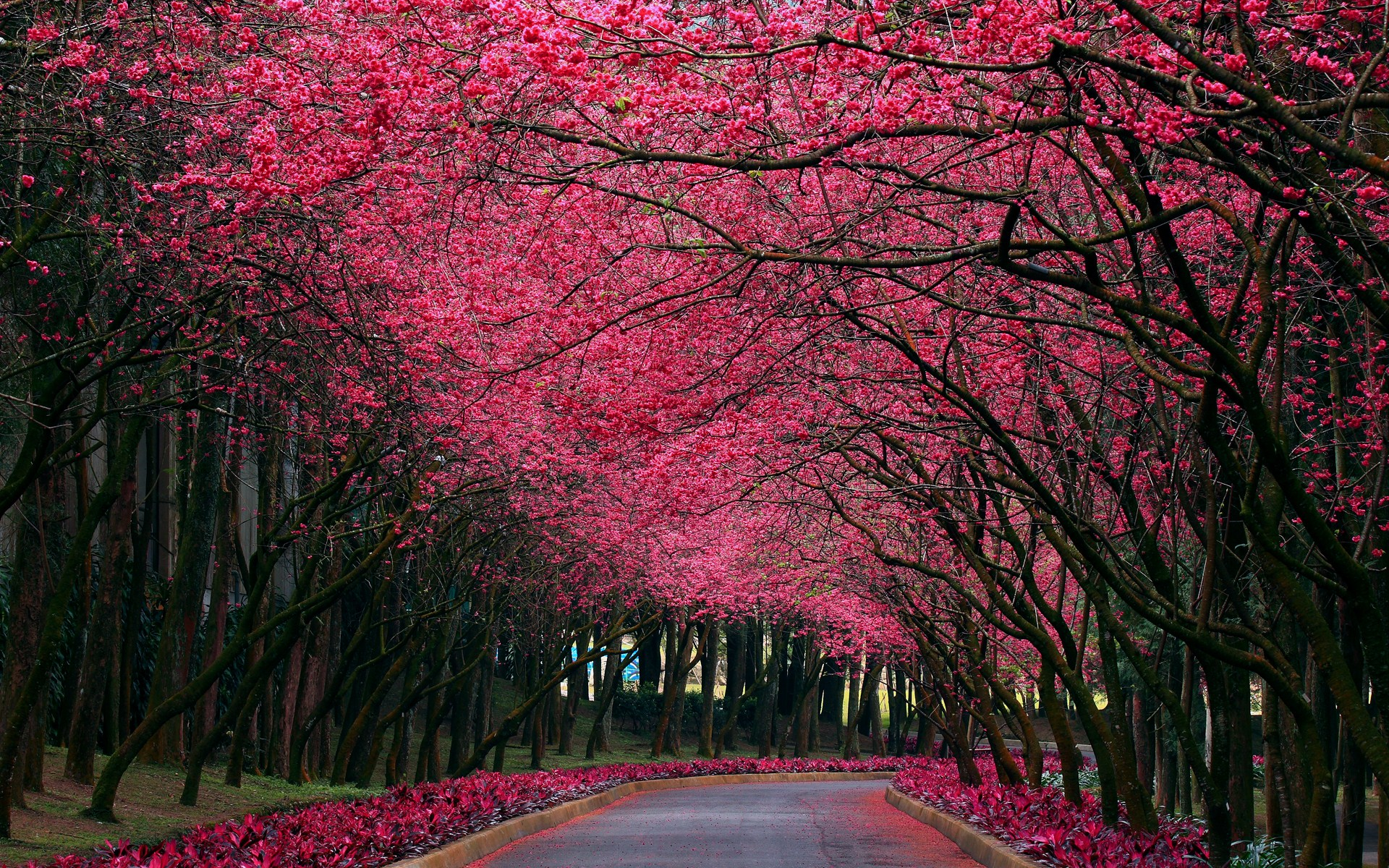 78 Best images about Pink Flowers on Pinterest | Flower, Silk rose
