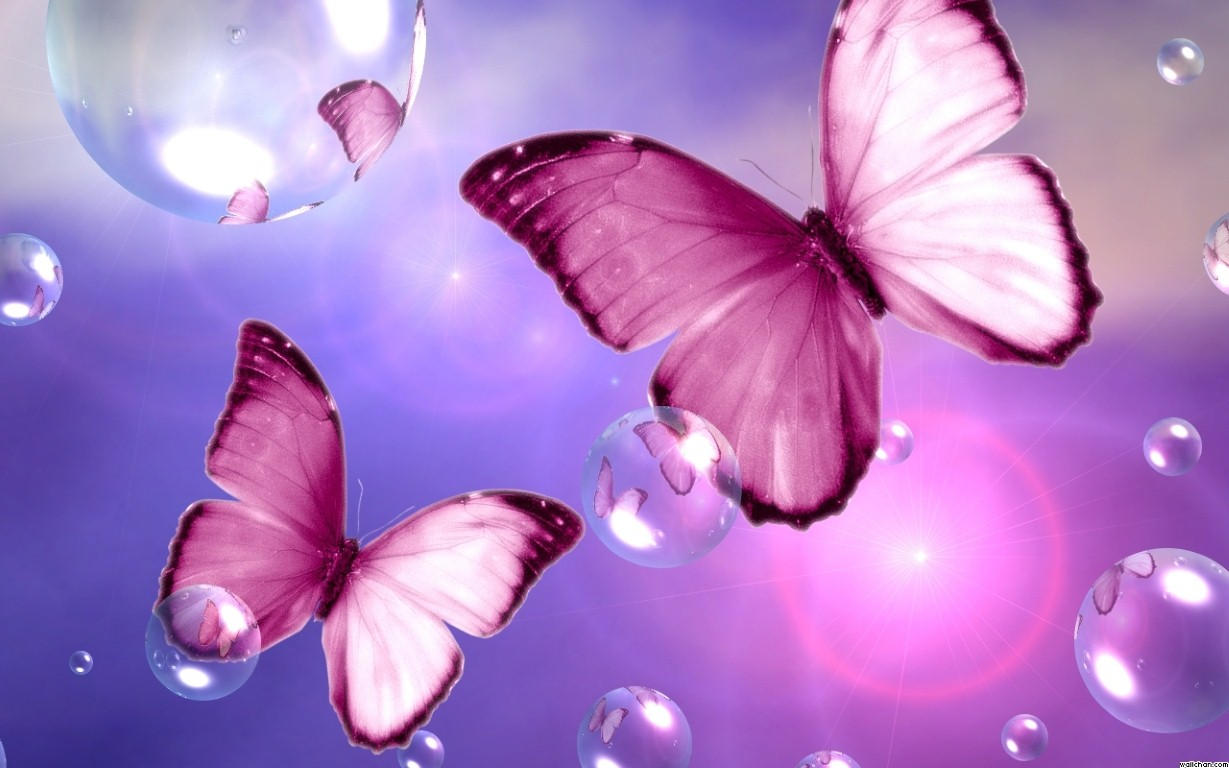 Pretty Butterfly Wallpapers Sf Wallpaper