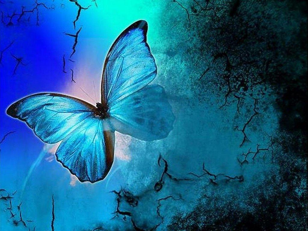 Pretty Butterfly Wallpapers Sf Wallpaper