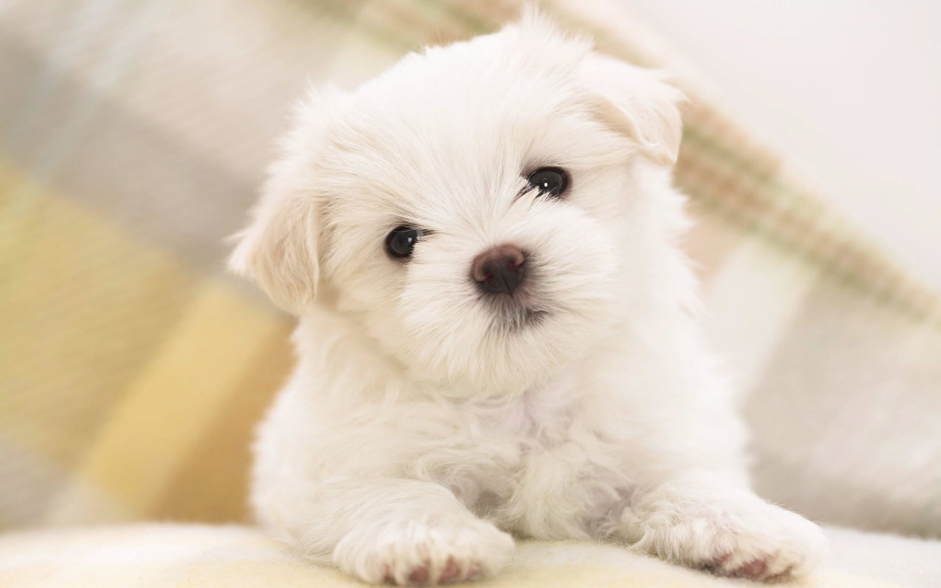 Puppy Wallpapers Free by