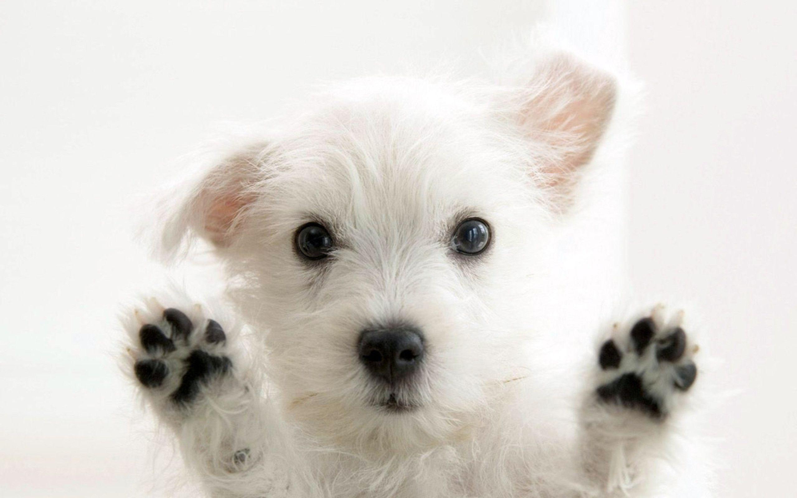 Puppy wallpaper - SF Wallpaper