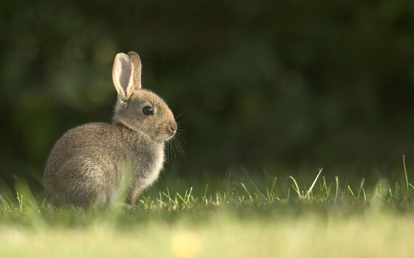 Rabbit Live Wallpaper - Android Apps on Google Play