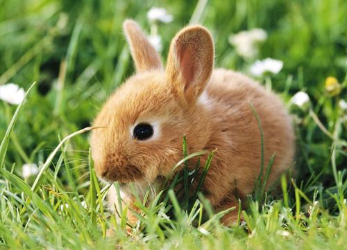 30+ Free Heartwarming Rabbit Wallpapers | Naldz Graphics
