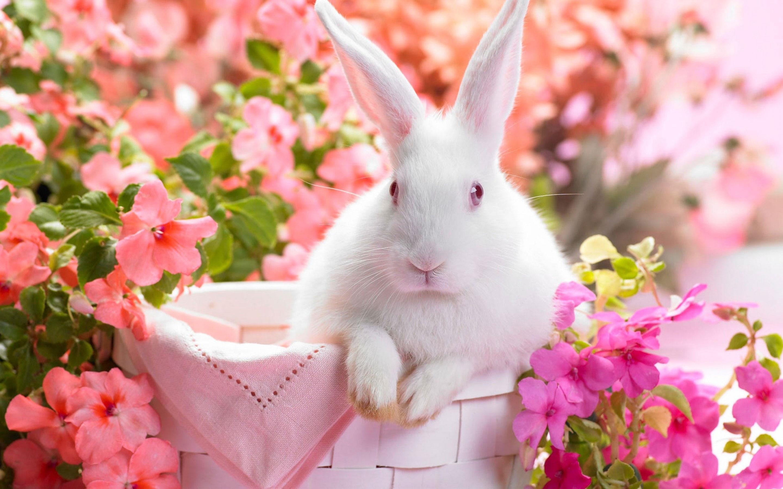 Rabbit Desktop Wallpapers - THIS Wallpaper