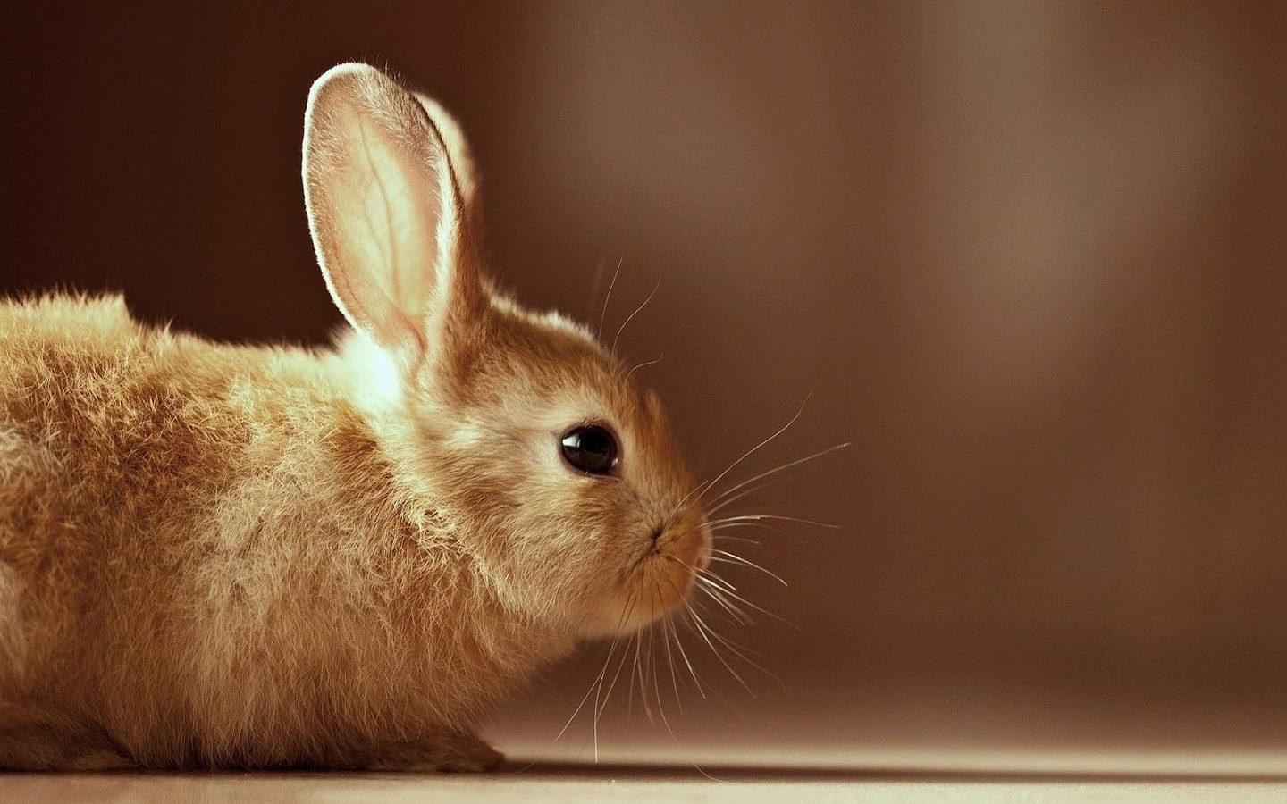 Rabbit Wallpapers - Android Apps on Google Play