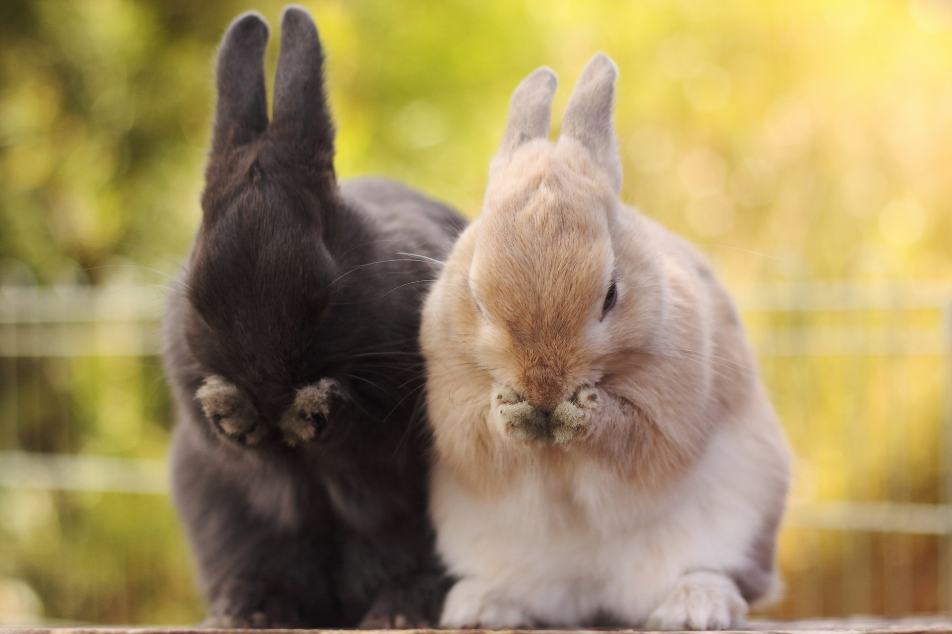 Rabbit Wallpapers, Full HDQ Rabbit Pictures and Wallpapers