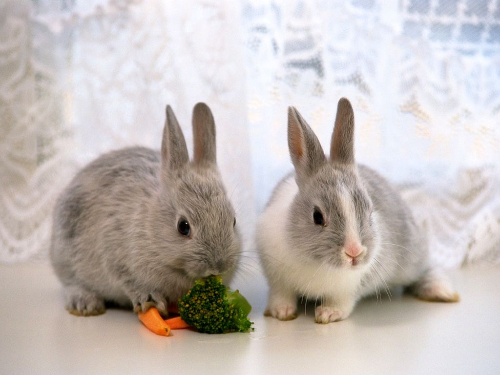 Collection of Rabbit Wallpaper on HDWallpapers